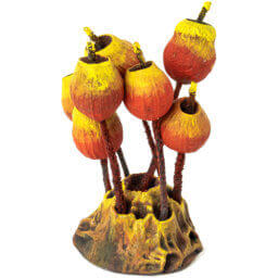1. Produktabbildung - Sporenbaum rot
